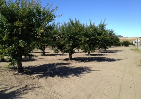 20 Acres of Apricots- Orchard for Sale Hollister, California