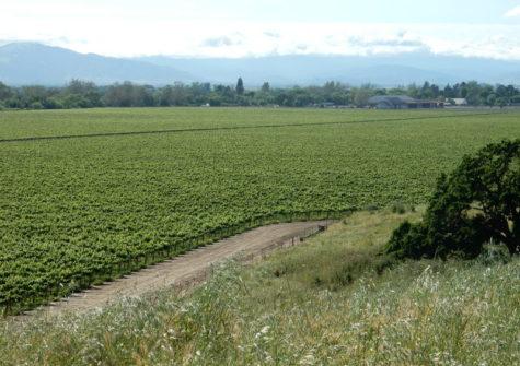 Dunne Ranch Vineyard San Benito County
