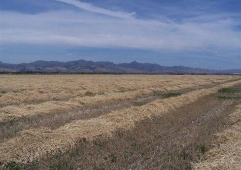 Shore Road Ranch – Hollister, CA 95023