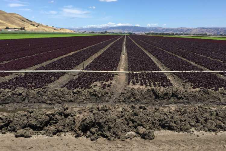 Farm Land For Sale In California